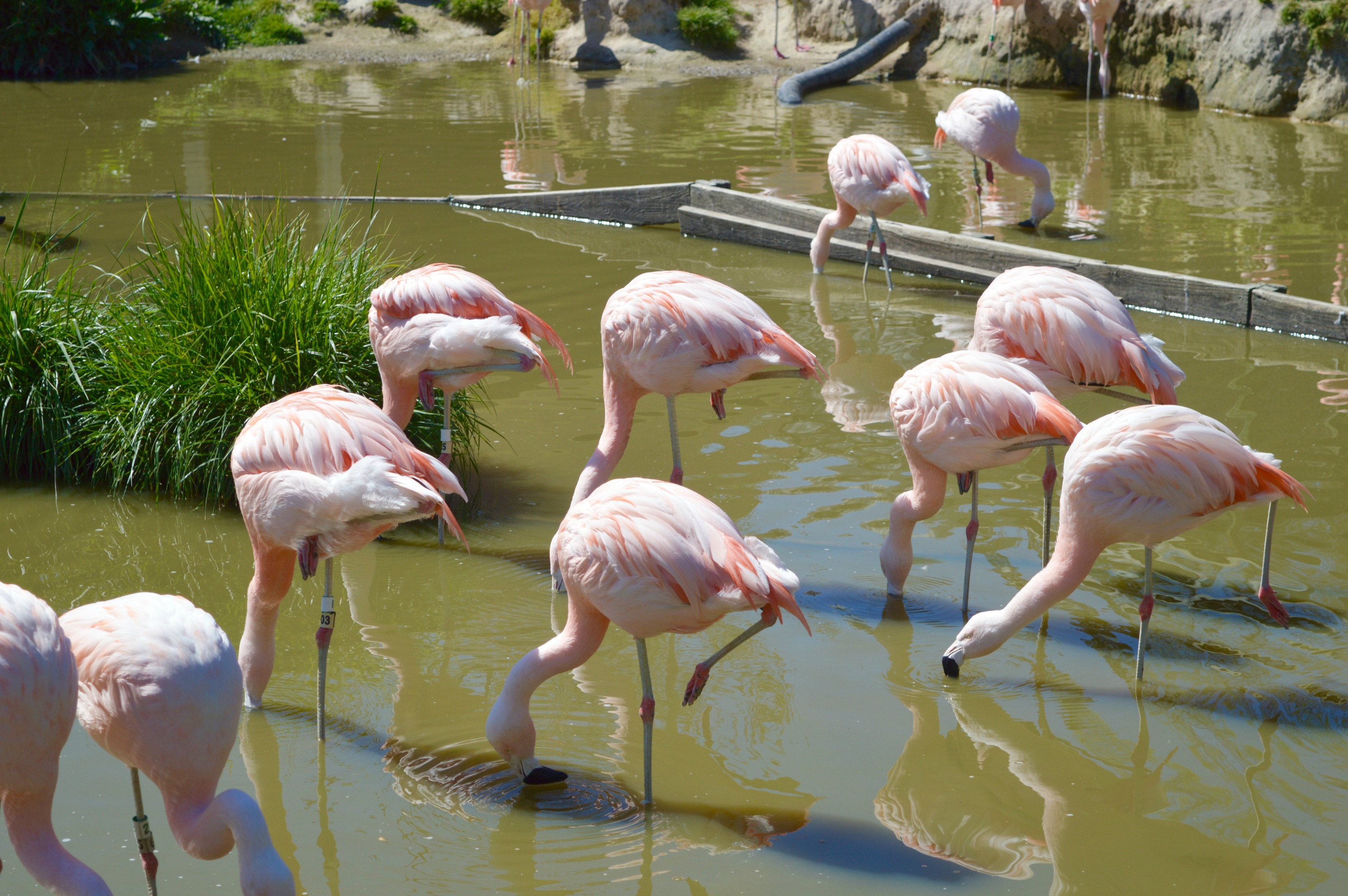 metro richmond zoo- virginia- virginia zoo- family virginia- virginia bloggers
